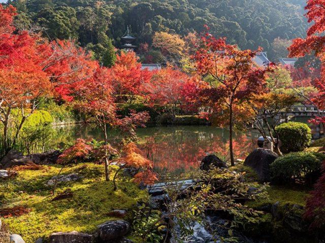 Красивые пейзажи красочные осенние деревья пруд деревья кустарники растения в дневное время природа