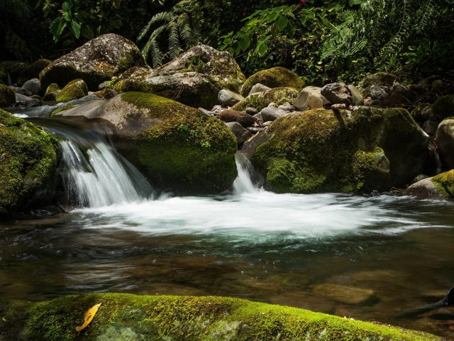 Водопад камни мох водные растения
