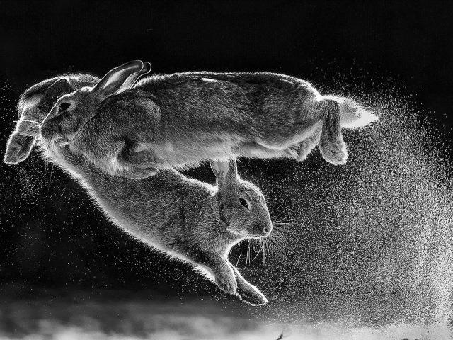 Прыгающие кролики