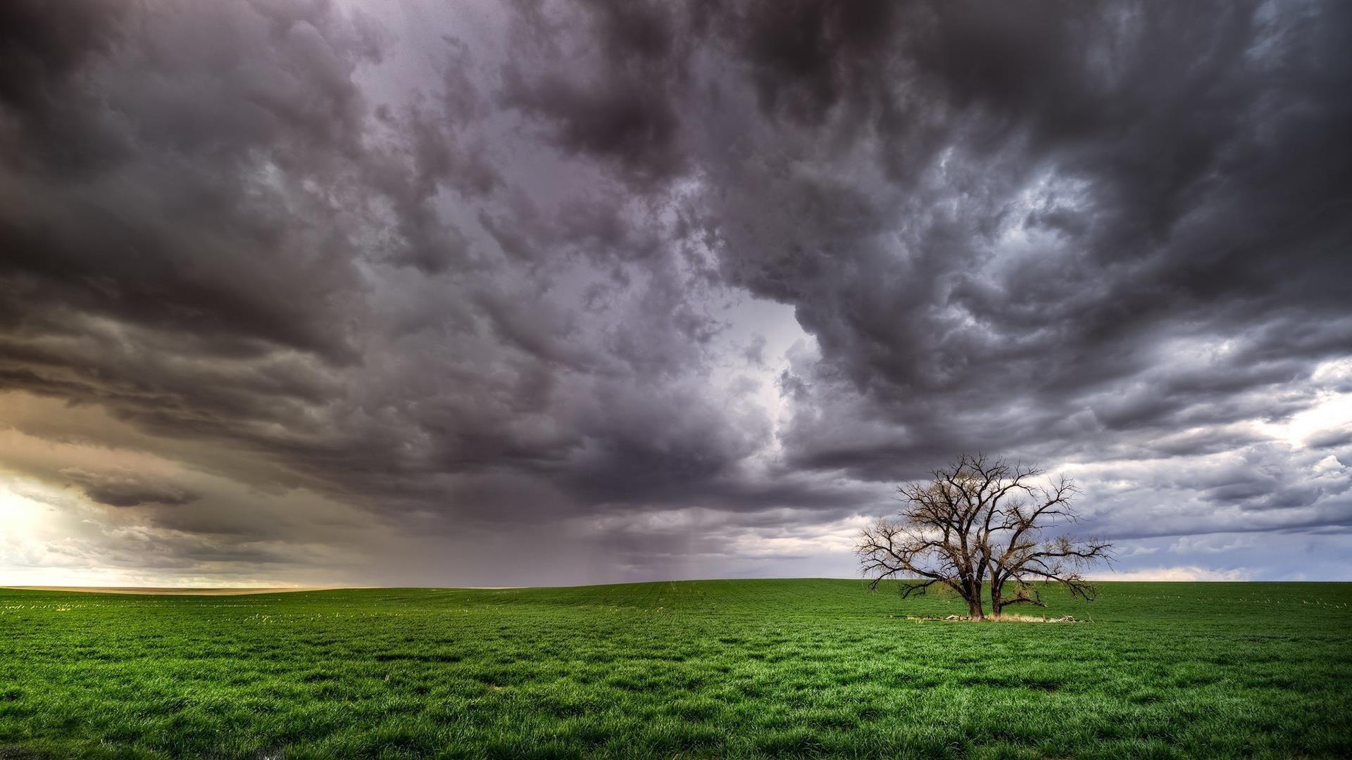 Поле дерево облака обои скачать