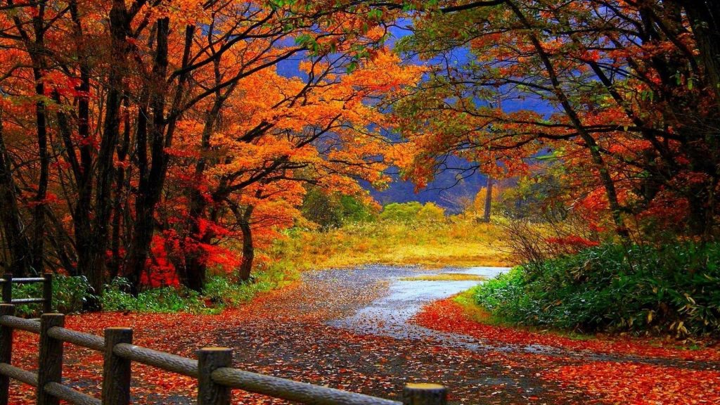 Тропинка между красочными осенними листьями деревьев в лесу в дневное время природа обои скачать