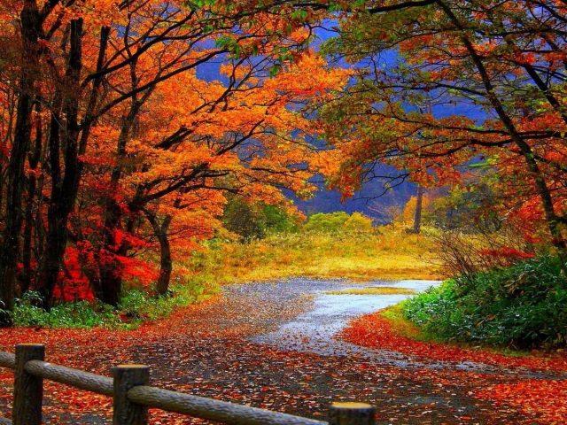 Тропинка между красочными осенними листьями деревьев в лесу в дневное время природа