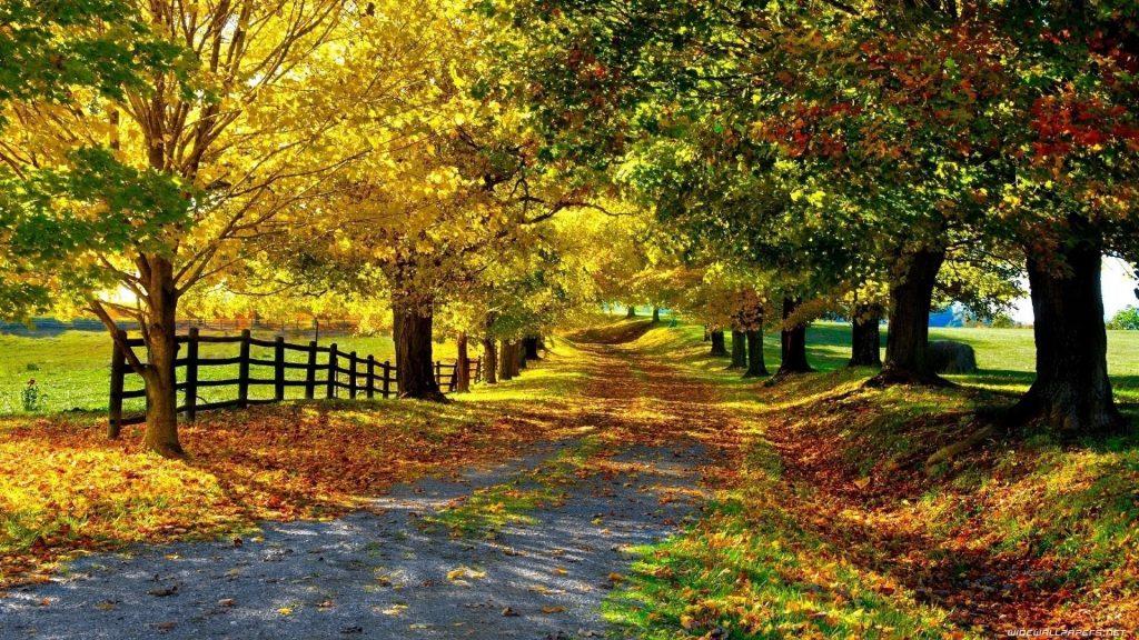 Дорога с красочными сухими листьями между забором покрытой землей и деревьями в дневное время природа обои скачать