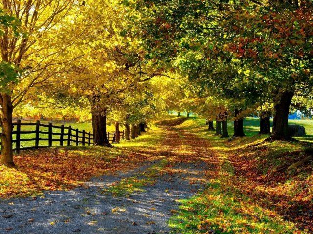 Дорога с красочными сухими листьями между забором покрытой землей и деревьями в дневное время природа