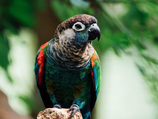 Красочная птица-попугай в сине-зеленых листьях фоновых птиц