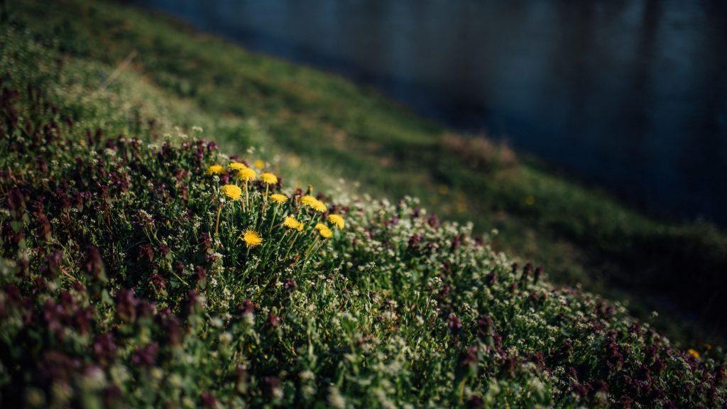 Желтые белые цветы трава поляна природа обои скачать