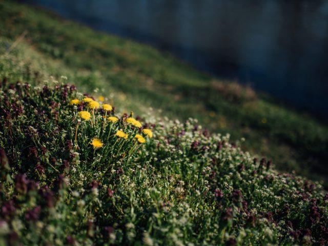 Желтые белые цветы трава поляна природа