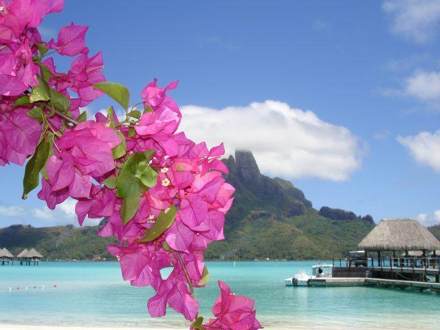 Море,  берег,  цветок
