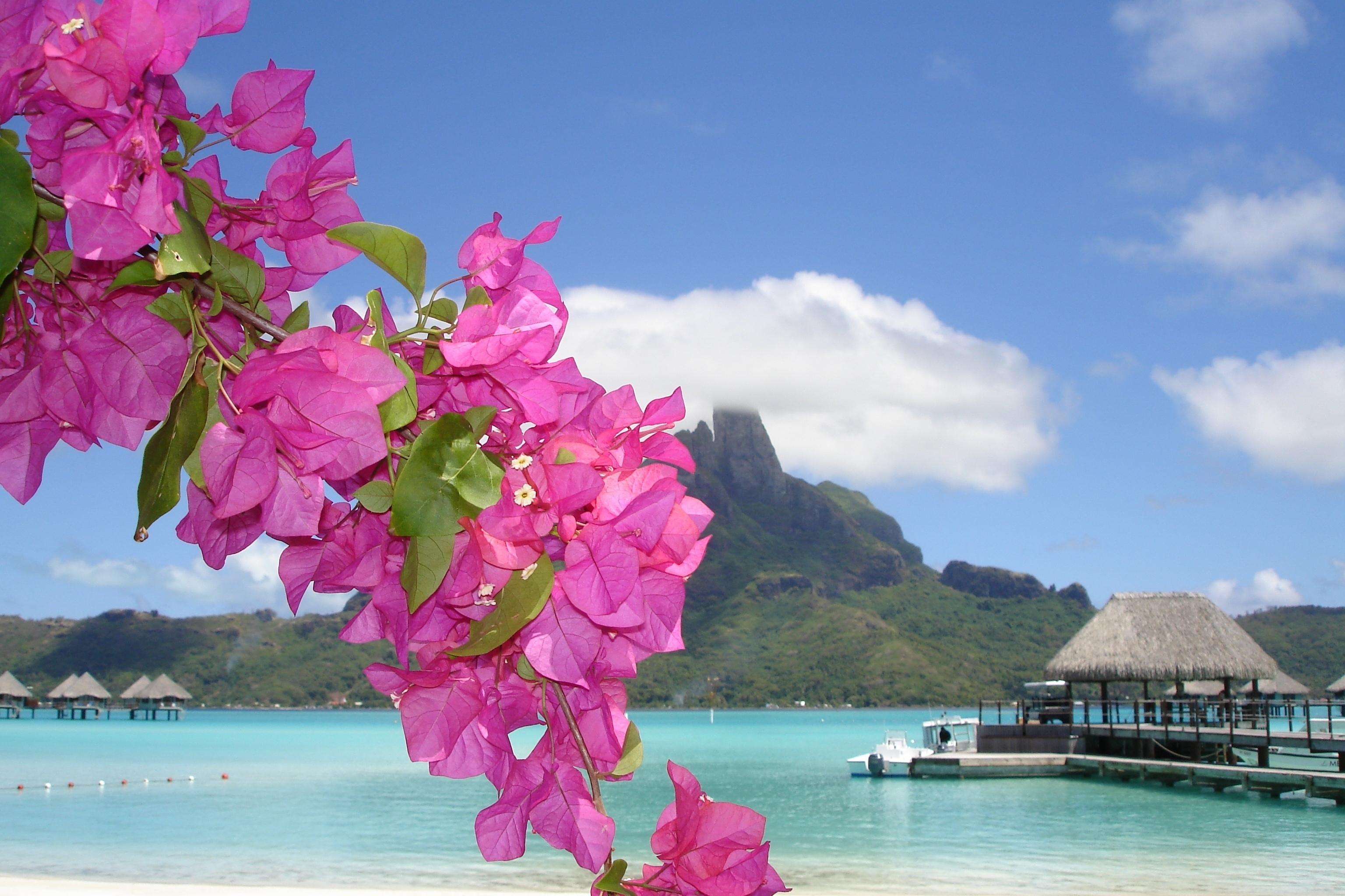 Море, берег, цветок обои скачать