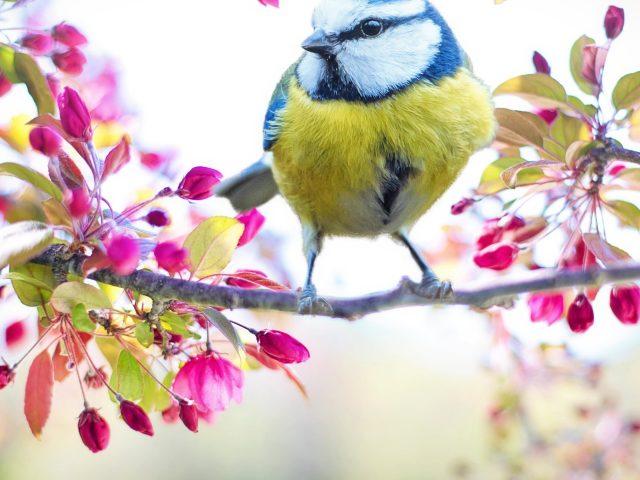 Белая сине зеленая птица на ветке дерева с цветущими цветами животные