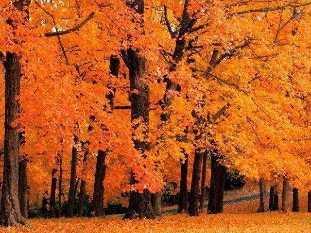 Желто-оранжевые осенне-весенние деревья с листьями лесная природа