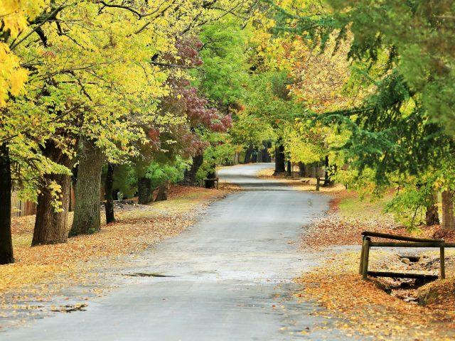 Дорога между зелеными желтыми осенне-весенними деревьями с листвой природа