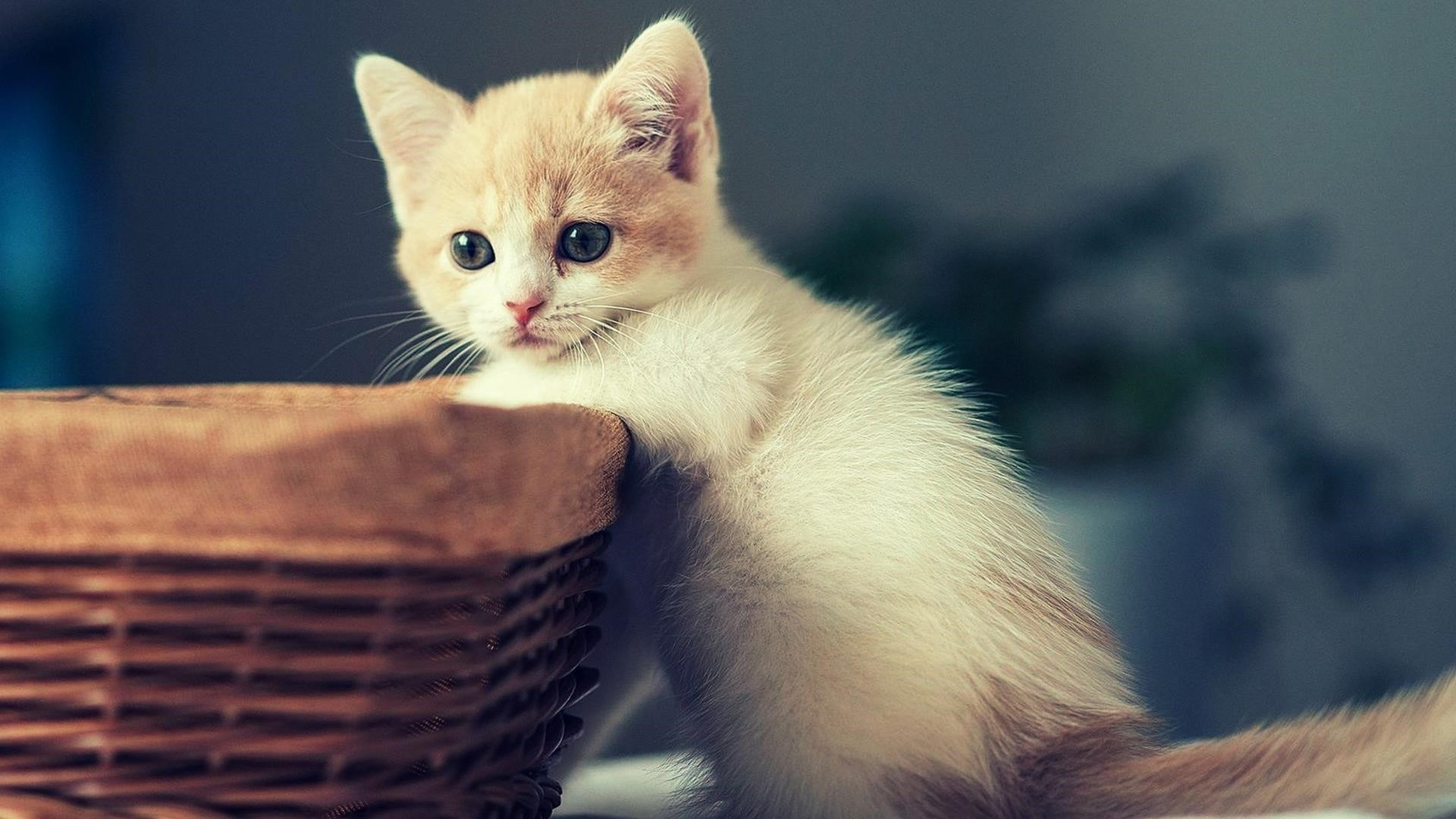 Белая кошка котенок стоит рядом с бамбуковой корзиной котенок обои скачать