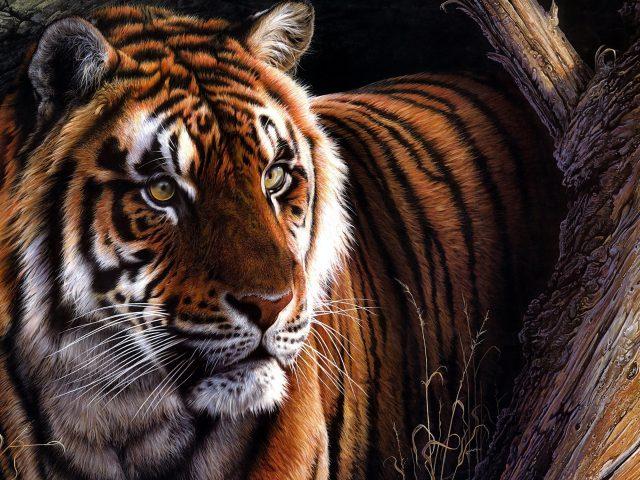 Тигровая масляная краска