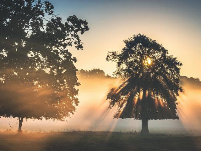 Дерево с солнечным лучом во время заката и тумана природа