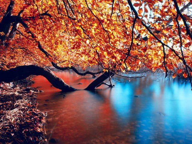 Красно оранжевое лиственное дерево на водоеме природа