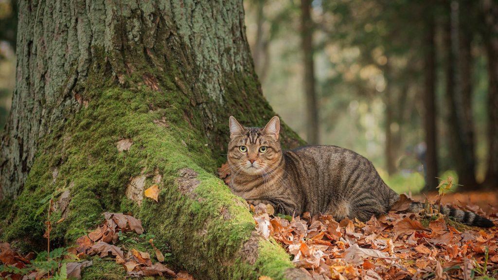 Большой кот сидит рядом с древесным котом обои скачать