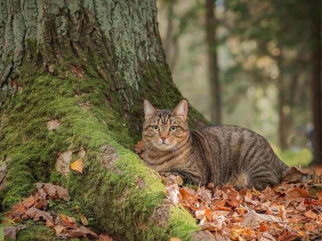 Большой кот сидит рядом с древесным котом