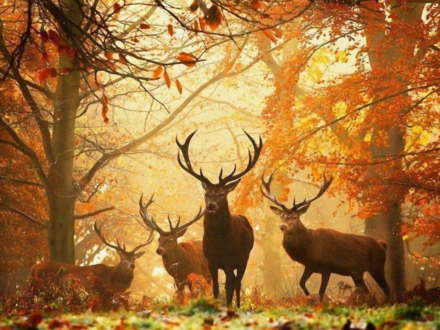 Олени в лесу с острыми рогами животные