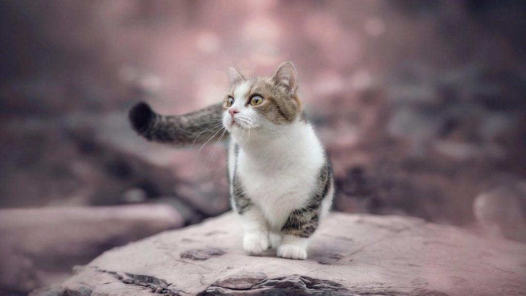 Белый черный коричневый кот котенок на скале в размытом фоне котенок обои скачать
