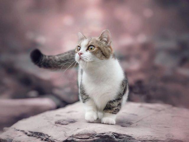Белый черный коричневый кот котенок на скале в размытом фоне котенок
