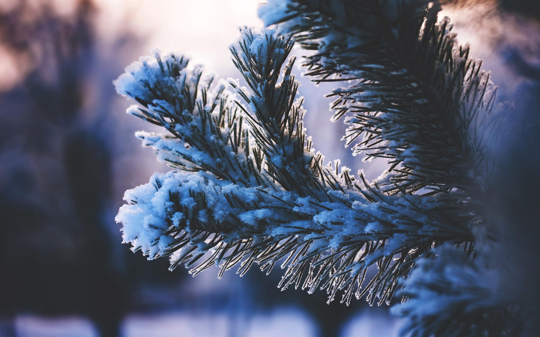 Снег покрыл дерево. обои скачать