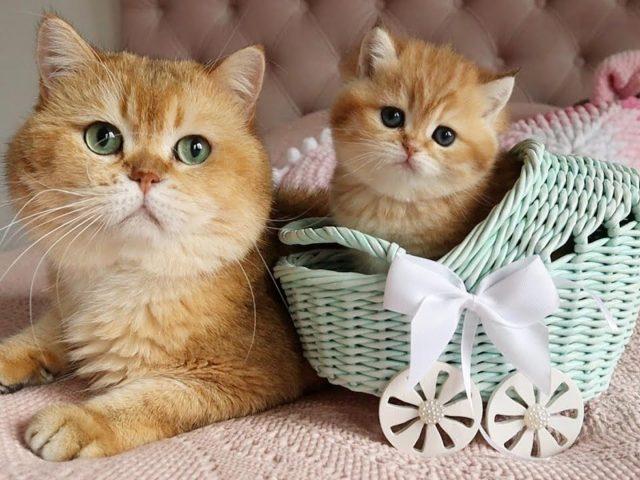 Зеленые глаза карие белые пухлые кошка и котенок котенок