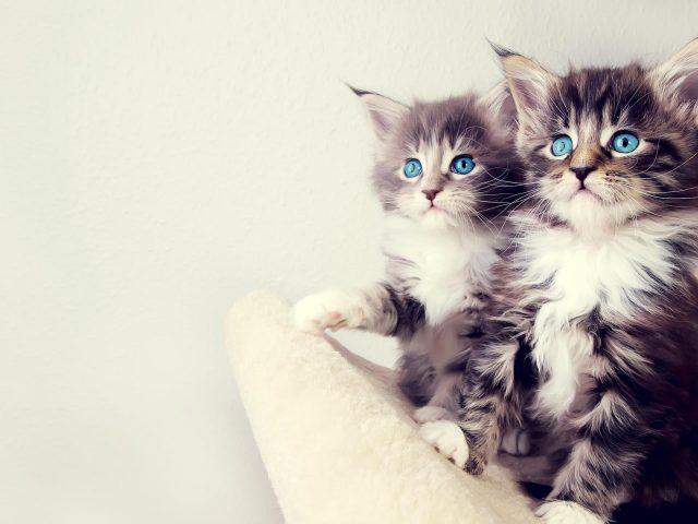Милые котята белые и черные животные домашние животные