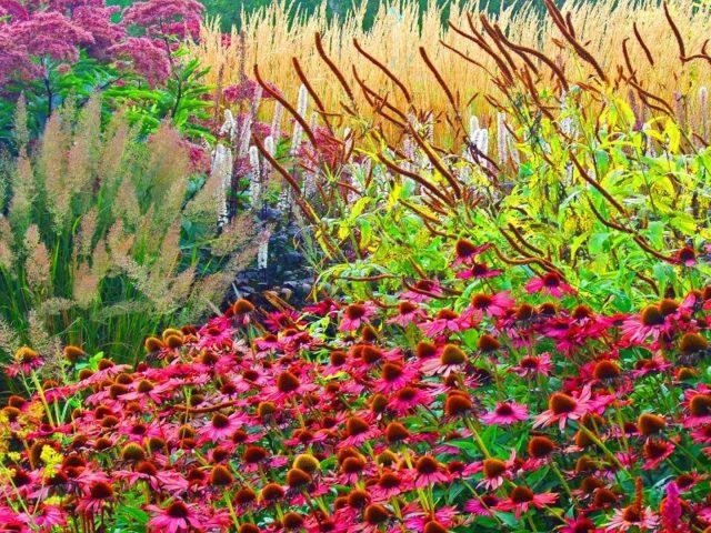 Красивое разнообразие красочных цветов растений цветов