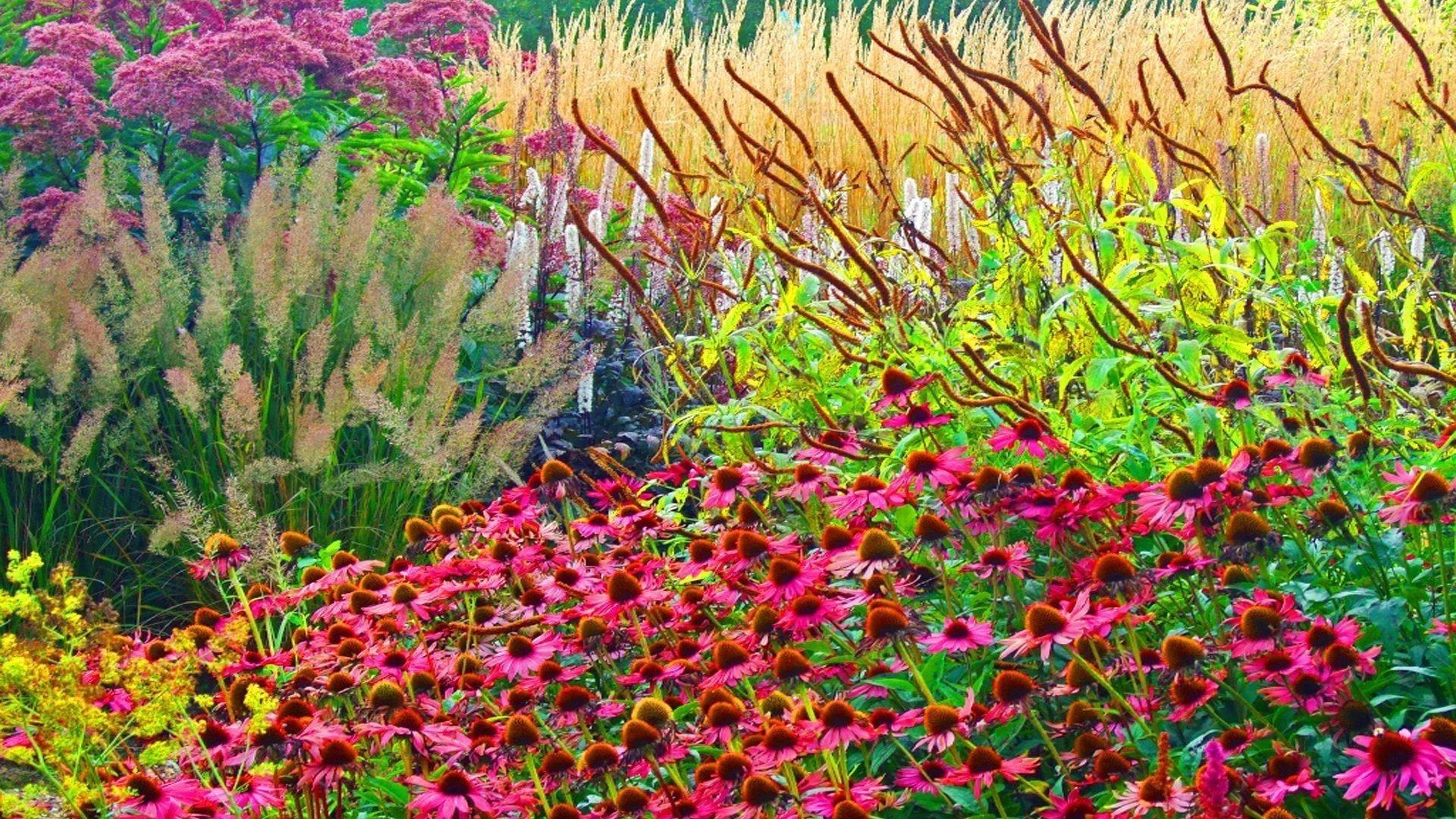 Красивое разнообразие красочных цветов растений цветов обои скачать