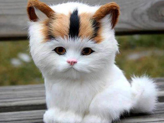 Симпатичный котенок белой кошки сидит на деревянной скамейке на фоне размытого кота