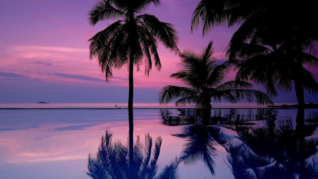 Кокосовые пальмы отражение на воде под фиолетовым облачным небом природа обои скачать