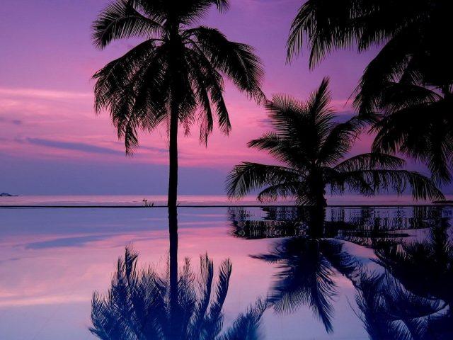 Кокосовые пальмы отражение на воде под фиолетовым облачным небом природа