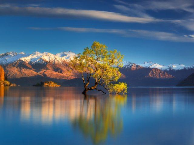 Дерево в центре озера отражение в воде природа