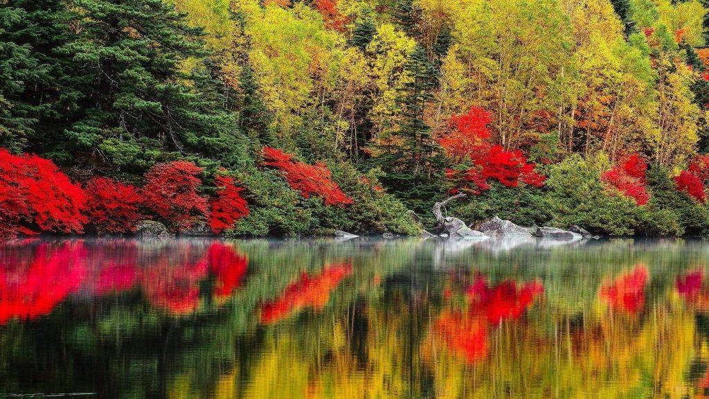 Красно зеленые лиственные деревья отражение на спокойном водоеме на фоне леса природа обои скачать