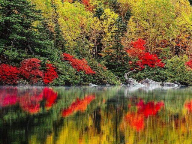 Красно зеленые лиственные деревья отражение на спокойном водоеме на фоне леса природа