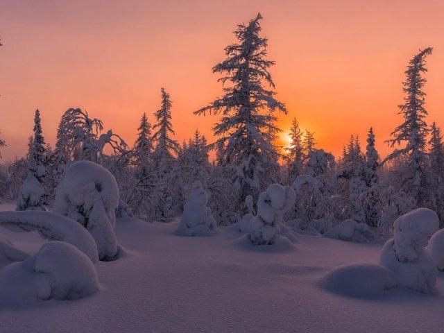 Заснеженный еловый лес во время заката природа зима