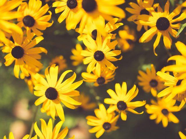 Цветок желтый сад