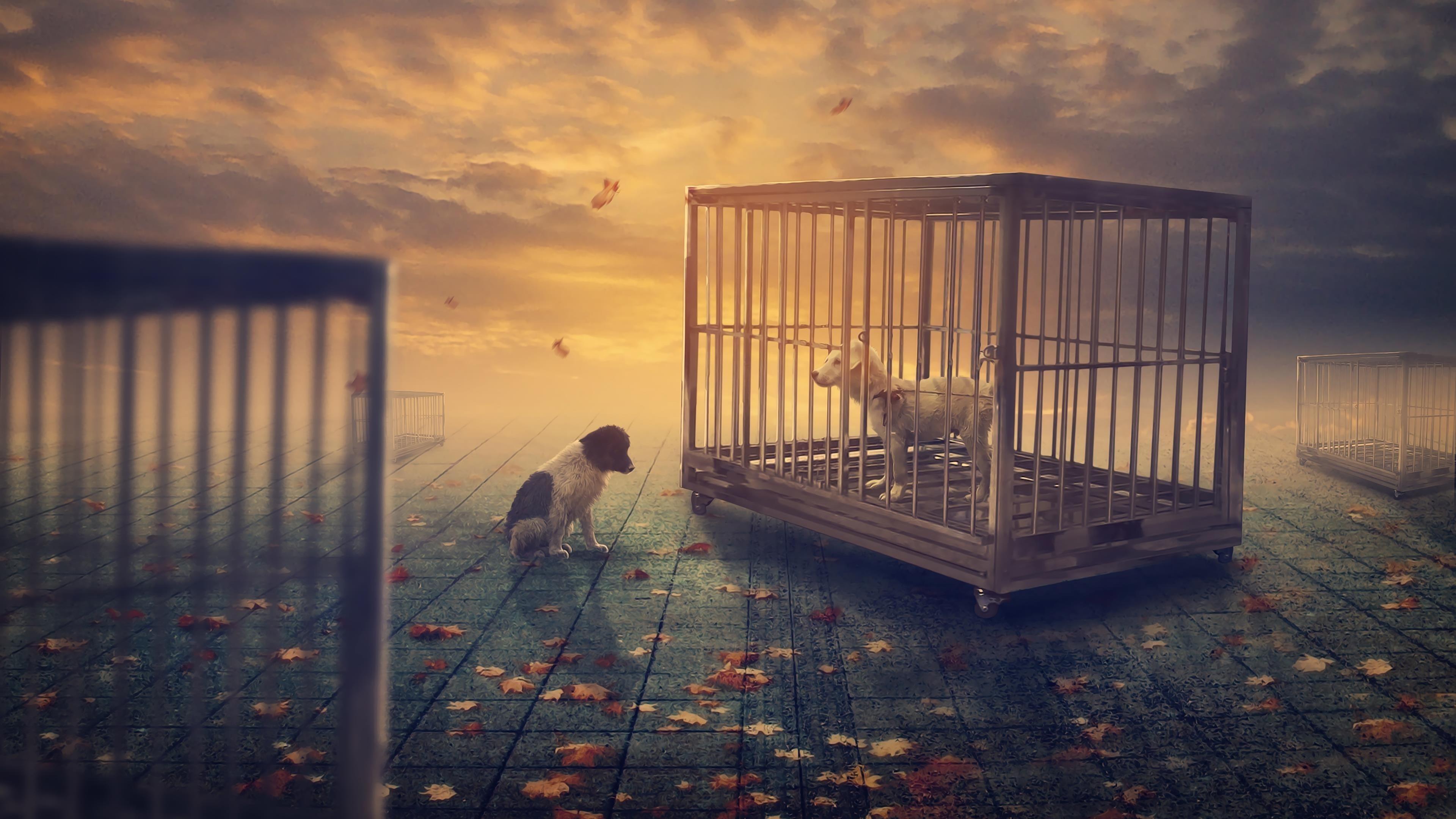 Собачья фантазия обои скачать