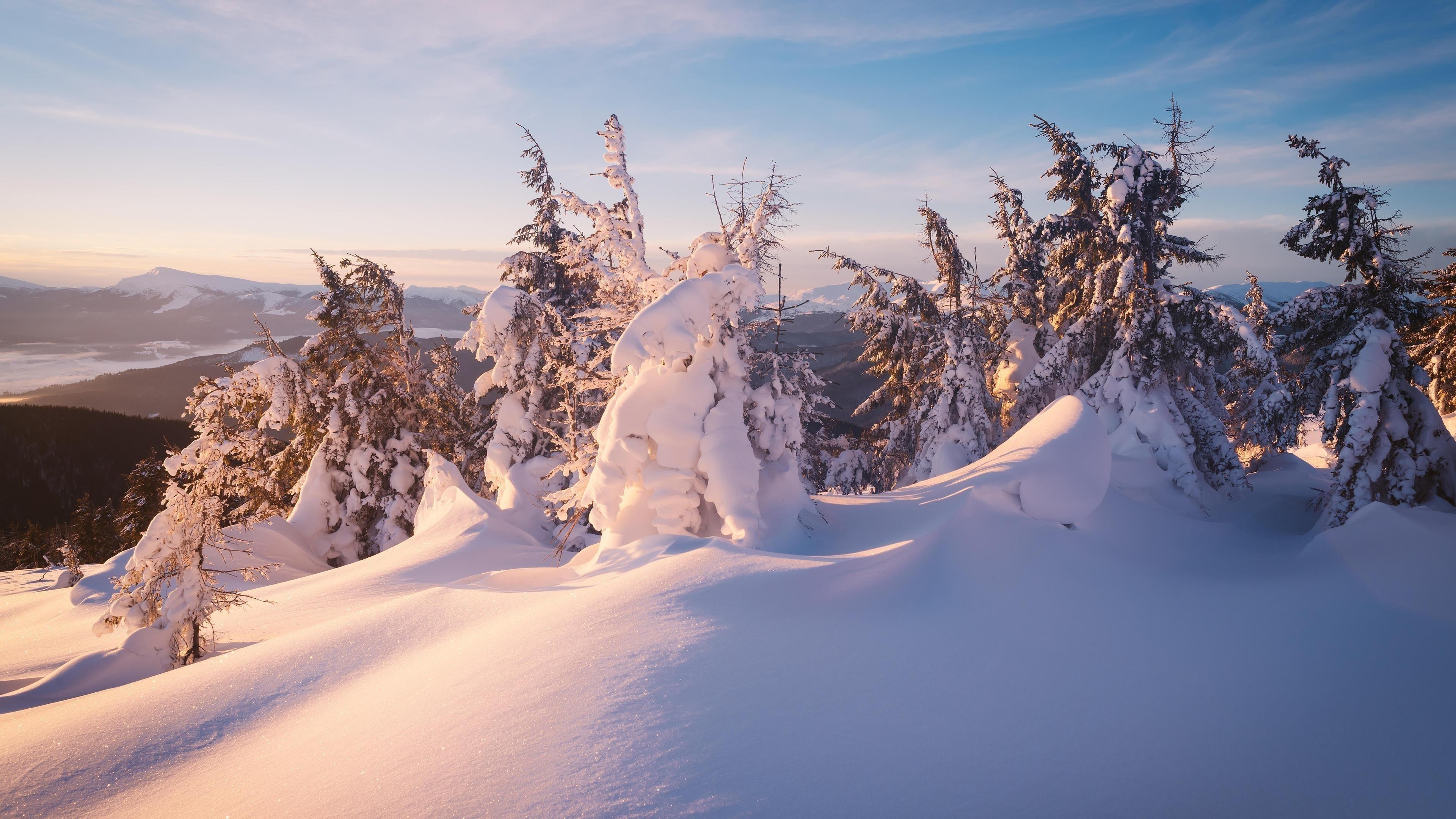 Зима снег ель природа обои скачать