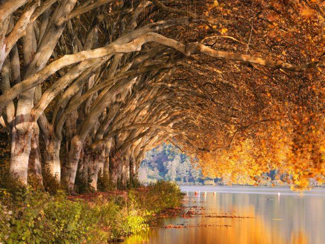 Осенний парк деревьев
