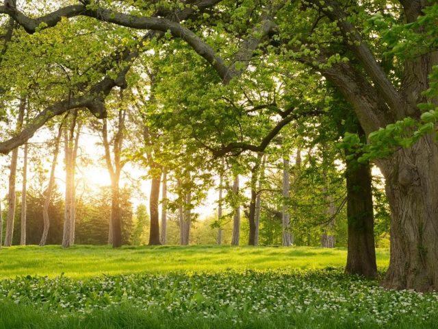 Лес с зелеными деревьями во время летней природы