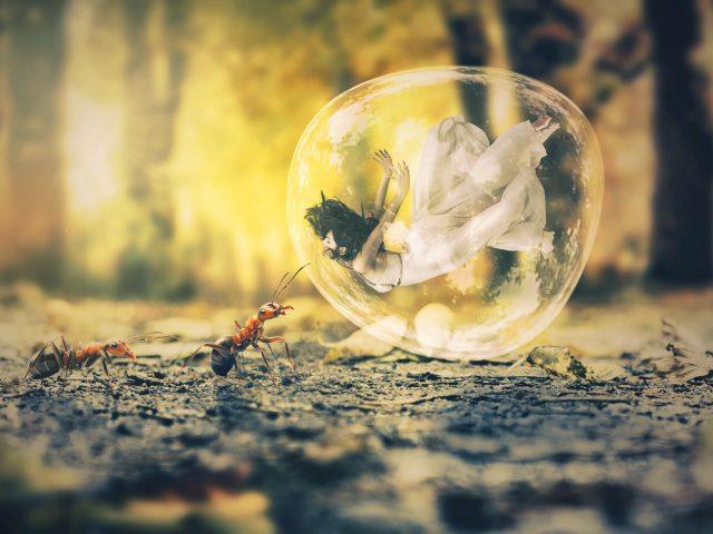 Пузырь муравей мечта