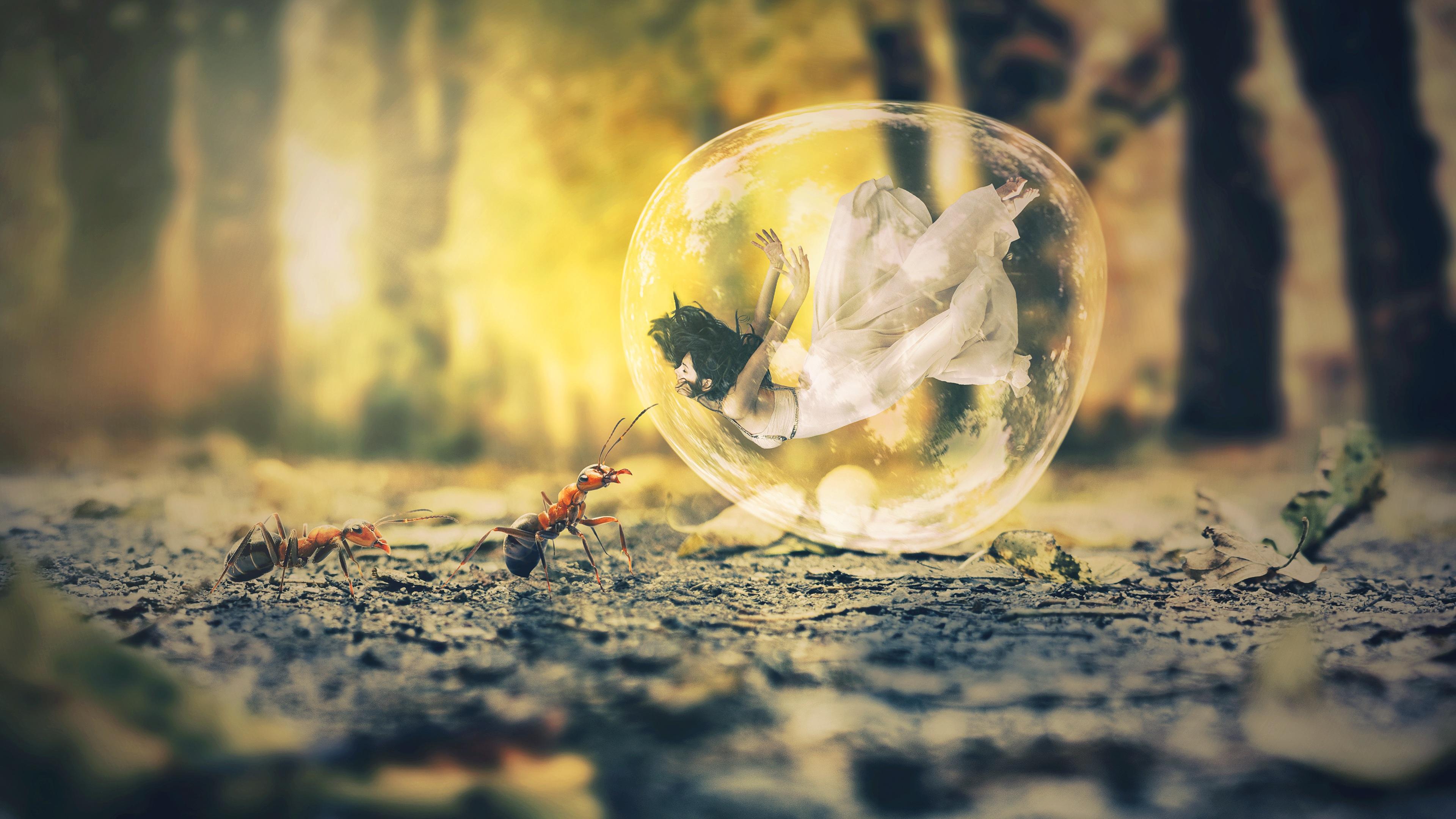 Пузырь муравей мечта обои скачать