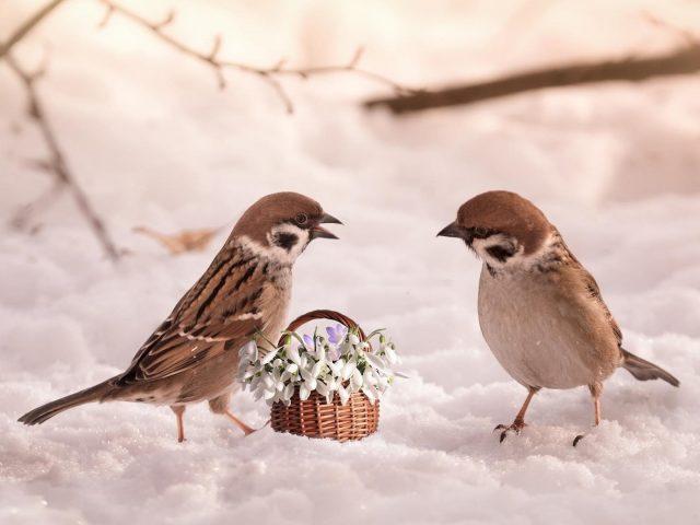 Цветочная корзина между двумя коричневыми белыми птицами на снегу животные