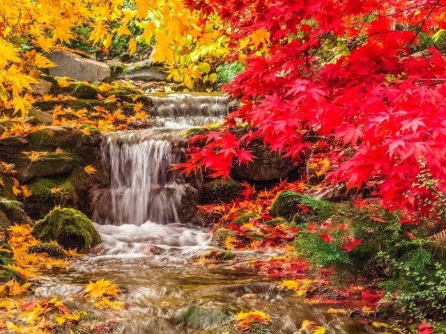Водопад между желто красными осенними листьями деревьев покрыл скалу природы