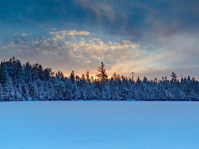 Зимние деревья снег