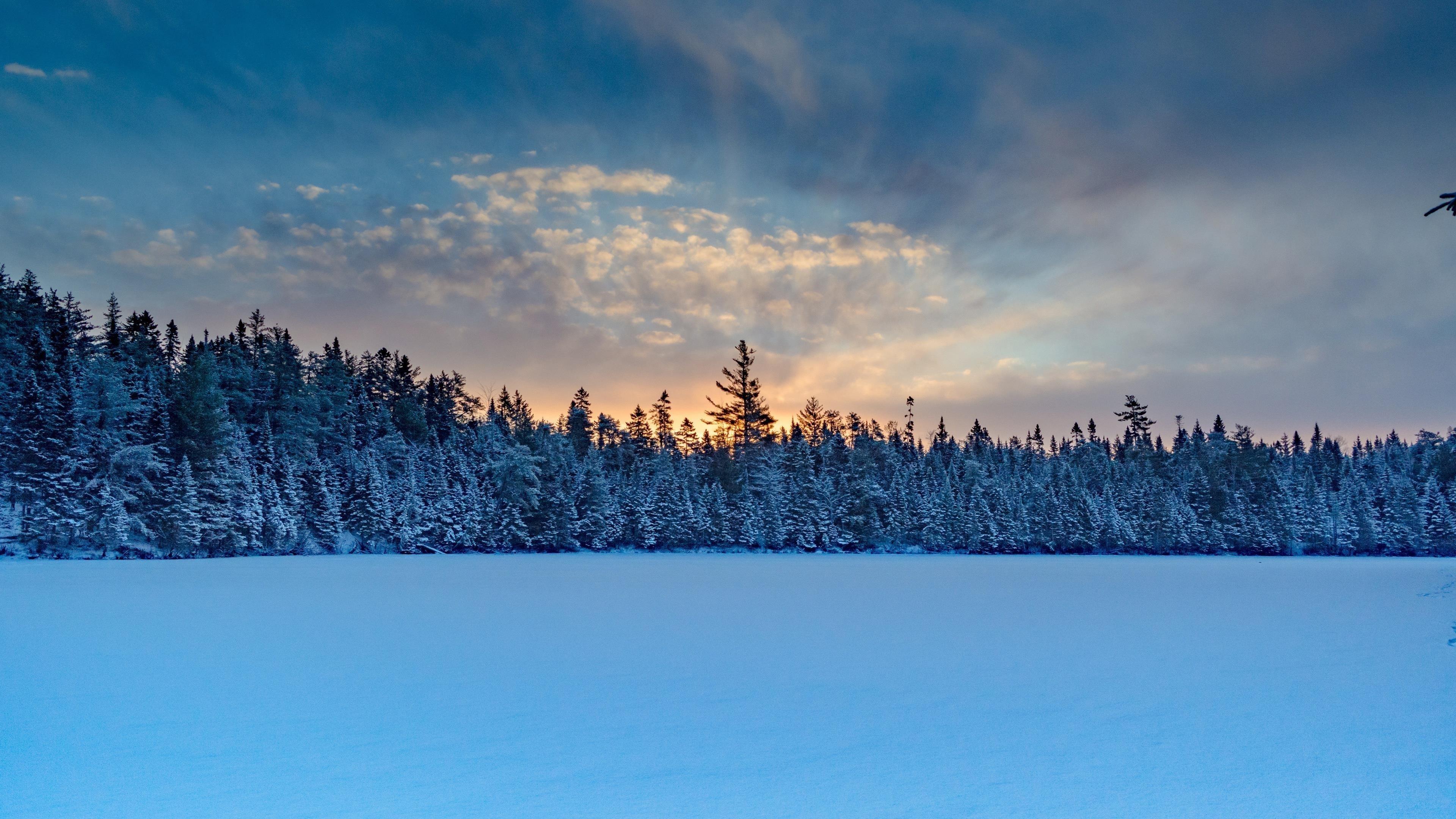 Зимние деревья снег обои скачать