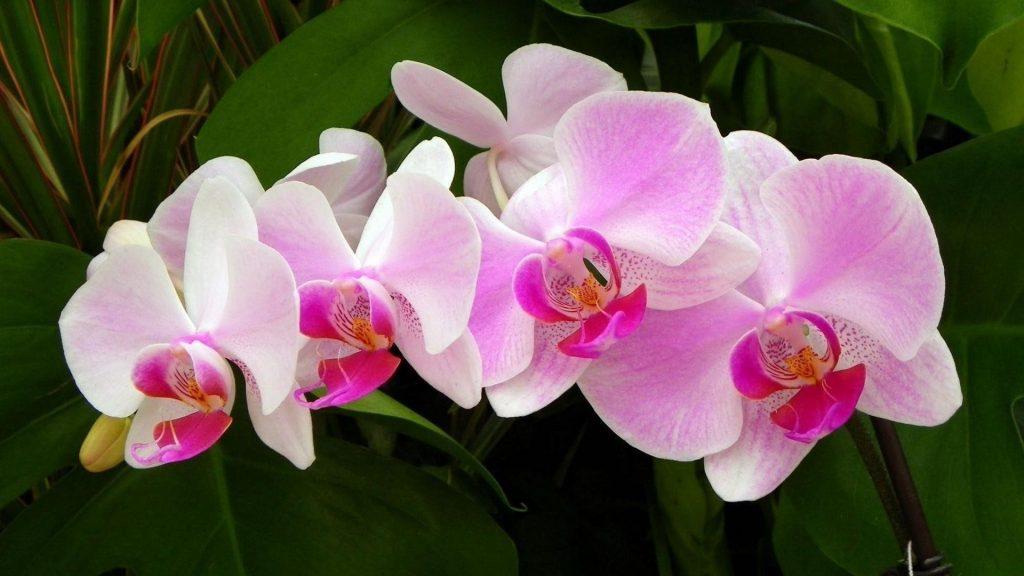 Ветка орхидеи зеленая крупным планом цветочные цветы обои скачать