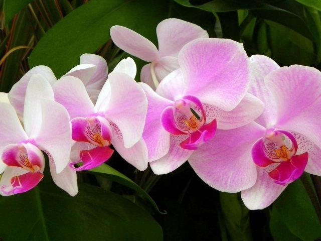 Ветка орхидеи зеленая крупным планом цветочные цветы